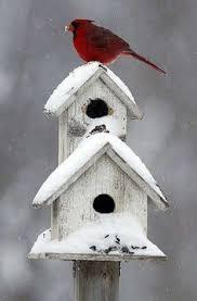 36 birdies images nature beautiful