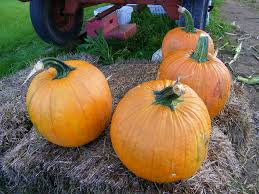 Local Pumpkin Patches Maryland Local Farm Blog Archives Page 2 Of 2 Deep Run Farms