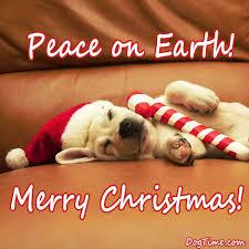 Christmas Dog Meme - christmas ho ho hos baconlovershaven