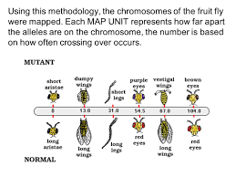11 5 Linkage And Gene Maps Answers Linkage Groups U0026 Chromosome Maps Ppt Video Online Download