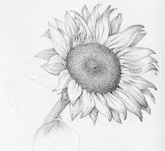 flower drawings 42 amazing designs images with color card