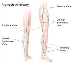 Foot Vascular Anatomy A New Jersey Vascular Doctor Seek Prompt Treatment For Vein Disease