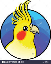 cartoon cockatiel cockatiel bird animal art cute cartoon style vector hand drawn