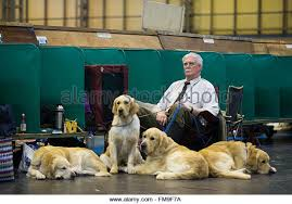 affenpinscher crufts 2016 uk kennel club stock photos u0026 uk kennel club stock images alamy