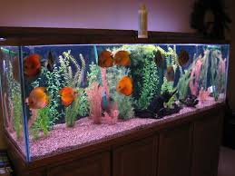 tips to decorate fish aquarium