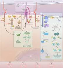 Cell Reproduction Concept Map Answers Molecular And Biochemical Aspects Of The Pd 1 Checkpoint Pathway