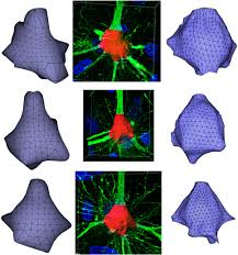 frontiers neurotessmesh a tool for the generation and