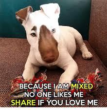 Why You No Love Me Meme - because iam mixed no one likes me share if you love me love meme
