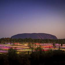 field of light uluru australian outback marathon uluru ayers rock resort