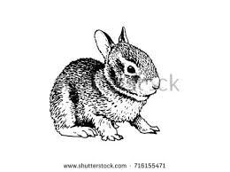 graphical funny rabbit isolated white stock vector 716147674
