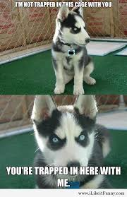 funny angry puppy meme1 ilikeitfunny pinterest puppy meme