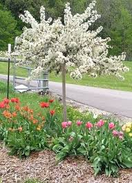 small landscape trees small landscape trees ornamental trees for
