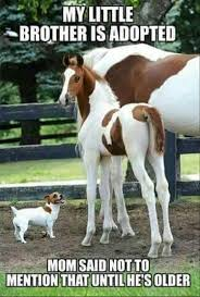Funny Animal Pictures Memes - pin by debbie sofie on horses pinterest animal funny animal and