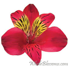 alstroemeria flower peruvian lilies flowers for sale buy wholesale peruvian lilies