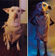 Dogs Halloween Costumes 25 Harry Potter Dog Costume Ideas Harry