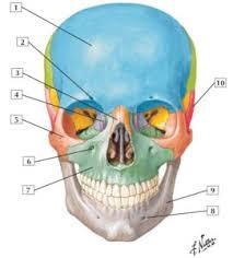 Human Anatomy Images Free Download Netter U0027s Anatomy Flash Cards Pdf Free Download Direct Link