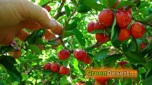 5 fruit trees that will you for the whole year