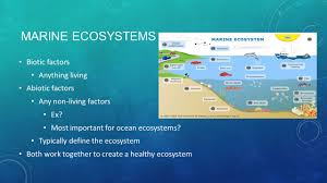 diving into ocean ecosystems ppt video online download