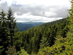 Washington Forest images In search of the fisher in washington washington forest jpg