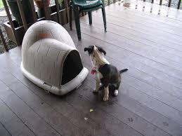 Large Igloo Dog House Small Igloo Dog House Igloo Dog House Ideas U2013 All New Cars