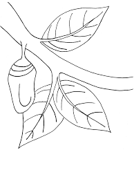 monarch butterfly chrysalis coloring book