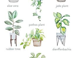 plant house plants awesome indoor plants names green thumb the