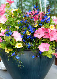 Gardening Basket Gift Ideas by Introduction To Unusual Container Gardens