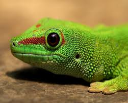 9 best love of reptiles images on pinterest reptiles chameleons