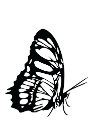 monarch butterfly coloring pages u2013 corresponsables