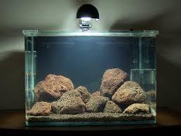 sulawesi aquascape nature aquarium sulawesi biotope pinterest
