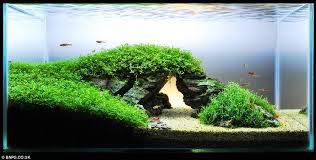 Best Substrate For Aquascaping 195 Best Aquascape Images On Pinterest Aquarium Ideas Aquarium
