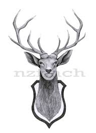 stag head designs nzfinch a4 stag head wallmounted digital print of original artwork