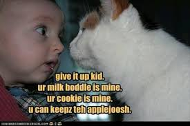Appropriate Memes For Kids - 22 funny cat memes for kids funny pics story