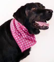 how to choose pink bandana for pets bandanas