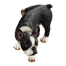 shop design toscano lifting a leg naughty boston terrier 7 in design toscano lifting a leg naughty boston terrier 7 in animal garden statue