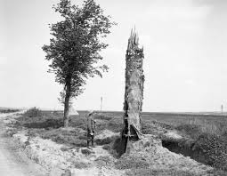 file a canvas and steel tree observation post near souchez 15