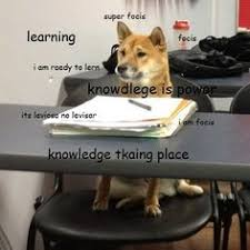 Shibe Doge Meme - doge or lama why not both wowing hard humorous things