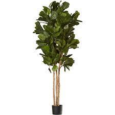 Fiddle Leaf Fig Tree Care by Fiddle Leaf Fig Tree Nyc
