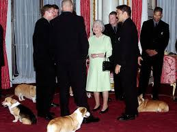 Queen Corgis Queen U0027s Corgis Are Fed Steak On Silver Platters By A Butler Royal