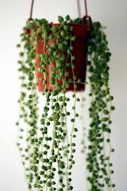 21 best house plants office plants images on pinterest balcony