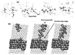 molecular simulation of co2 and co3 brine mineral systems