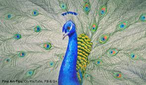How To Draw A Waving Flag How To Draw A Peacock With Color Pencils Drawing Feathers And