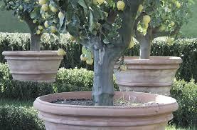 italian planters u0026 pots terracotta pottery eye of the day