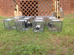 skunk removal a all animal control