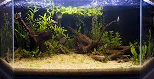 chambre aquarium attractive deco chambre fille 3 ans 13 id233e d233coration