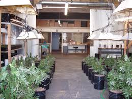 warehouse grow room design home design