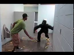 bathroom prank ideas fascinating 40 escaped gorilla bathroom prank design inspiration