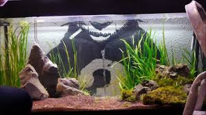aquascaping ideas aquarium aquarium pinterest aquariums