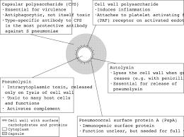 Factors Of 481 Streptococcus Pneumoniae Thorax