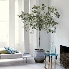 best 25 indoor trees ideas on best indoor trees